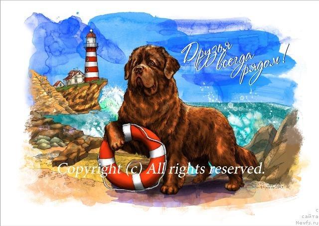 Ньюфаундленд открытки