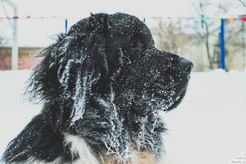фото собак альфа